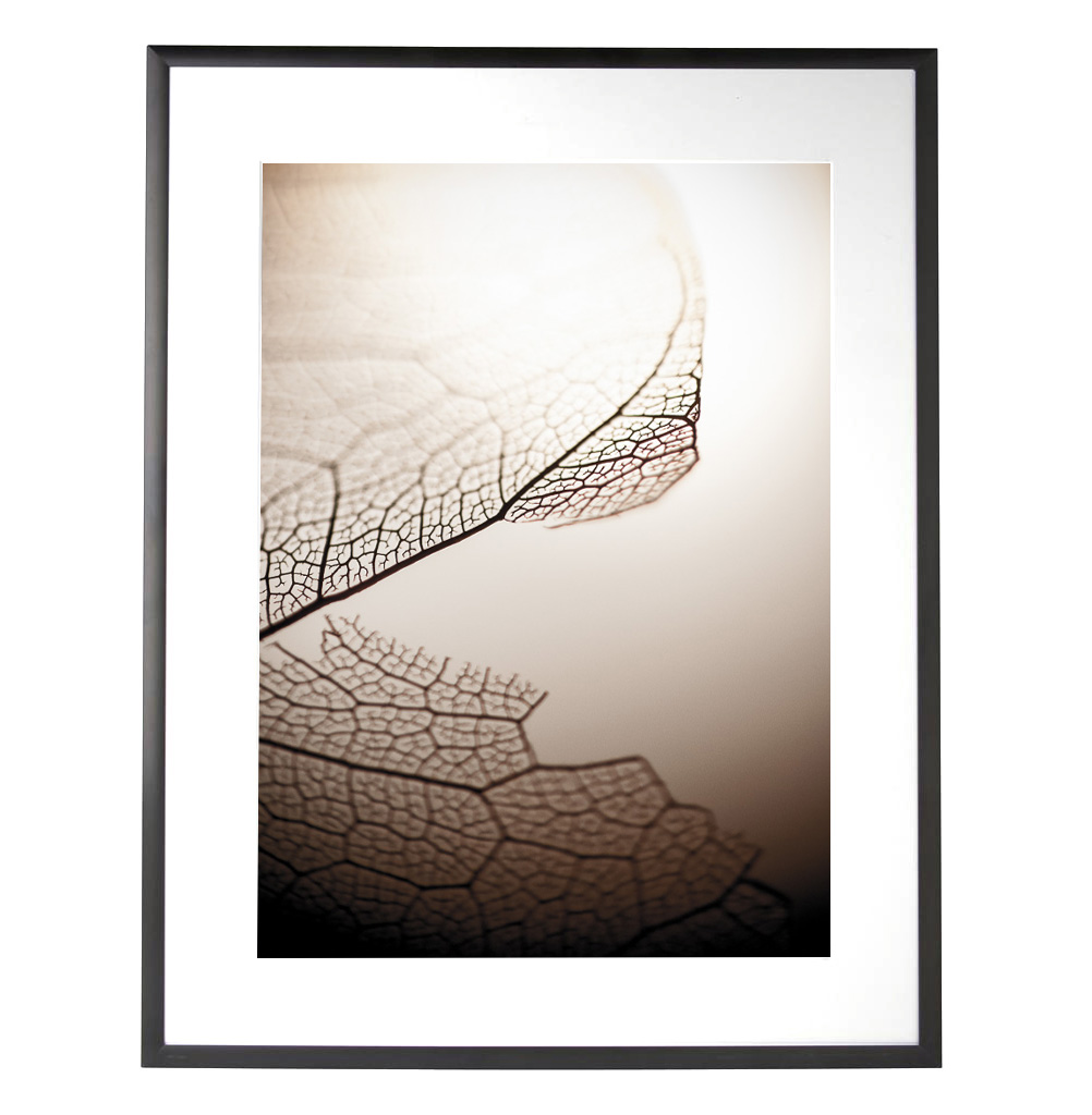 Art in Photography Leaf (frame)- Matthew SIller