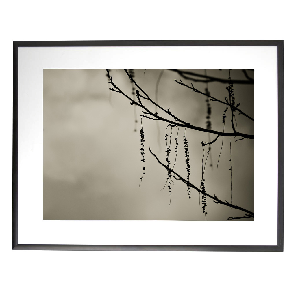 Art in Photography Tree (frame)- Matthew SIller